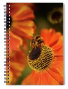 The Bee And The Helenium Spiral Notebook