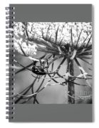 The Beetle Acrobat Black And White Spiral Notebook