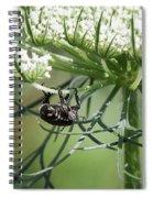 The Beetle Acrobat Spiral Notebook