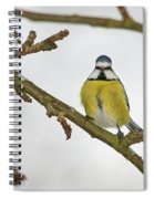 The Bold One. Eurasian Blue Tit Spiral Notebook