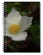 The Boulder Raspberry Flower Spiral Notebook
