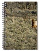 The Bull Elk Spiral Notebook