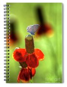 The Butterfly And The Coneflower Spiral Notebook