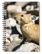 The Call Of The Pika Spiral Notebook