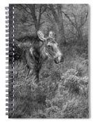 The Calm Of A Moose Bw Spiral Notebook