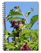 The Cedar In The Lilac Spiral Notebook