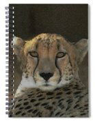 The Cheetah Spiral Notebook