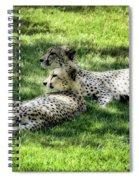 The Cheetahs Spiral Notebook
