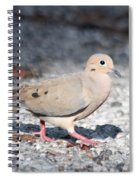 The Chipper Mourning Dove Spiral Notebook