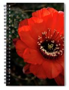 The Color Red Always Makes Smile Spiral Notebook