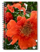 The Colour Orange Spiral Notebook