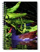 The Common Gallinule Spiral Notebook