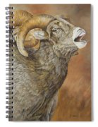 The Conquest - Bighorn Sheep Spiral Notebook