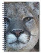 The Cougar 3 Spiral Notebook
