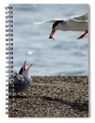 The Courtship Feeding - Series 1 Of 3 Spiral Notebook