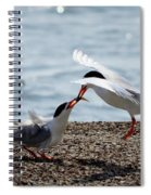 The Courtship Feeding - Series 2 Of 3 Spiral Notebook