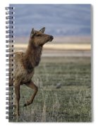 The Cow Elk Spiral Notebook