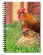 The Curious Cock And The Jealous Hen In The Mystery Of The Black Feather Spiral Notebook