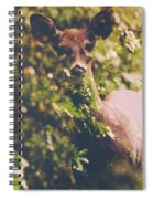 The Curious Doe Spiral Notebook