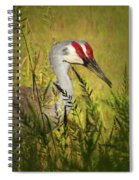 The Duo - Two Sandhill Cranes Spiral Notebook