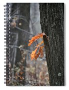 The End Of Fall Spiral Notebook