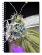 The Eye Of The Green-veined Butterfly. Spiral Notebook