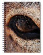The Eye Of A Burro Spiral Notebook