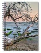 The Fallen Tree Spiral Notebook