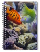 The Fish Kiss Spiral Notebook
