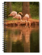 The Flock - The Serenity Of Flamingos At Water's Edge Spiral Notebook