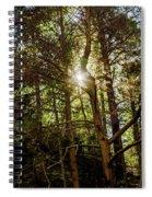 The Forest Sun Spiral Notebook