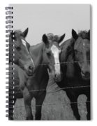 The Four Horses Spiral Notebook