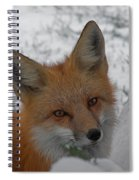 The Fox 4 Spiral Notebook