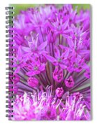 The Full Bloom Of Flowering Ornamental Onion Spiral Notebook