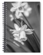 The Gentleness Of Spring Bw Spiral Notebook
