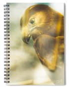 The Glass Case Eagle Spiral Notebook