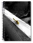 The Golden Dragon Spiral Notebook