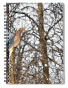 The Graceful Mourning Dove In-flight Spiral Notebook