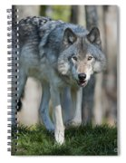 The Gray King... Spiral Notebook