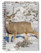 The Gtnp Mule Deer Buck Spiral Notebook