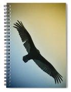 The Hawk Spiral Notebook