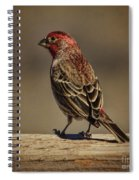 The House Finch Spiral Notebook