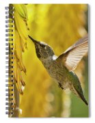 The Hummingbird And The Yellow Aloe  Spiral Notebook