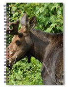 The Hungry Moose Spiral Notebook