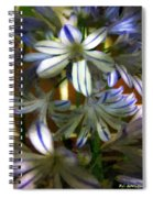 The Intransigent Beauty Of Blue Spiral Notebook