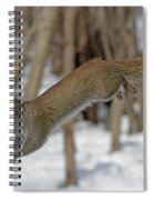 The Jumping American Red Squirrel Spiral Notebook