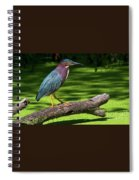 The King Of The Log.... Spiral Notebook