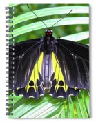 The Largest Butterfly In The World Spiral Notebook