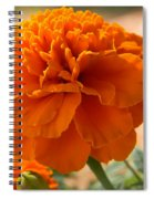 The Last Marigold Spiral Notebook
