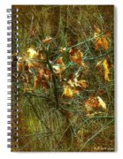 The Light In The Forest Spiral Notebook